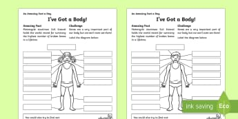 I've Got a Body! Activity Sheet