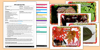 Autumn Leaf Rubbings EYFS Adult Input Plan And Resource Pack - adult