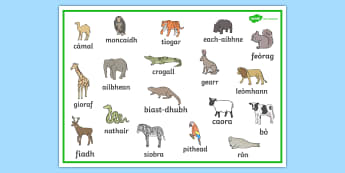 Scottish Gaelic Animal Word Mat - scottish gaelic, animal word mat, word mat, animal, animals, language, languages, scotland, key words, gaels, celtic, literacy, aids, sheep, cow, deer, otter, squirrel, rabbit, seal, zebra, lion, elephant, crocodile,
