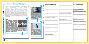 Emperor Penguin Life Cycle Differentiated Reading Comprehension Activity