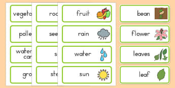 Plant Growth Topic Word Cards - usa, america, Plant, Growth, Word Card, Topic, Foundation stage, knowledge and understanding of the world, investigation, living things