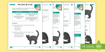KS2 Pet Care of a Cat Differentiated Fact File - KS2 National Pet Month (April 2017), pet, pets, cats, looking after cats, cat behaviour, cat care, f