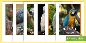 Tropical Birds Display Photos - bird species, rainforests, america, Australia, asia,