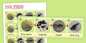 Frog Life Cycle Photo Strip - frog, life cycle, photo, strip
