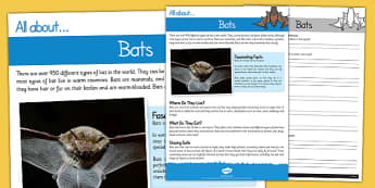 Bats Reading Comprehension - bats, reading, comprehension, read