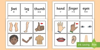 Parts of the Body Word and Picture Matching Cards English/Mandarin Chinese - Parts Of The  Body Word and Picture Matching Cards - parts of the body word and picture matching car