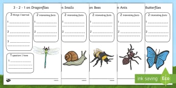 Minibeast Writing Frames - minibeasts, animals, writing, write