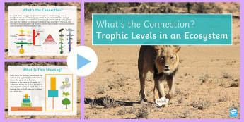 Trophic Levels in an Ecosystem What's the Connection? PowerPoint - KS4 What's the Connection?, Trophic Levels, Ecosystem, Herbivore, Carnivore, Energy, Pyramid of Bio