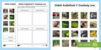 Didoli Anifeiliaid y Goedwig Law Taflen Weithgaredd - taflen weithgaredd didoli anifeiliaid y goedwig law, anifeiliaid, y goedwig law, mamaliaid, adar, am