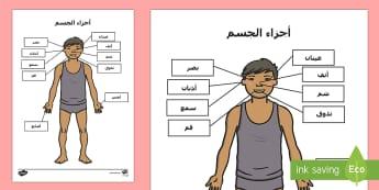 نشاط تسمية أعضاء الحواس في الجسم - أجزاء الجسم، عربي، أعضاء الجسم، نشاط، علوم