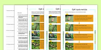 Czytanie ze zrozumieniem różne poziomy Cykl życia motyla po polsku