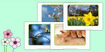 Spring Display Photos Arabic Translation - arabic, Spring, seasons, photo, display photo, lambs, daffodils, new life, flowers, buds, plants, growth