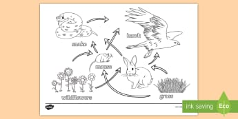 Science Homework Food Web Colouring Page - ks3, science, revision, colouring, food web, sceince, scince, colering, colourng, couloring, Sience,