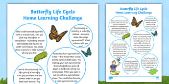 EYFS Butterfly Life Cycle Home Learning Challenge Sheet Reception FS2 - EYFS, homework, Early years, insects, caterpillar, minibeasts.