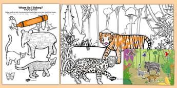 Rainforest Where Do I Live? Sorting Activity Polish Translation - polish, rainforest, sorting