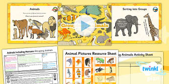 PlanIt - Science Year 1 - Animals Including Humans Lesson 4: Grouping Animals Lesson Pack