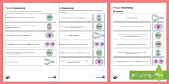 Mitosis Sequencing Cards - Sequencing Cards, gcse, biology, mitosis, cell, cell division, replication, growth, cell cycle, anap
