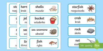 Seaside Rockpool Flashcards English/Polish - seashore, eal, wordmat, seaside, rockpool, fish, coral, bucket, spade, seaside rockpools, rock pools