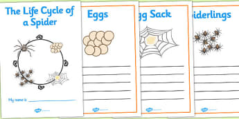 Spider Life Cycle Workbook - life cycle of a spider, workbook, life cycle workbook, work book, spider workbook, spider life cycle book, spider book, spider