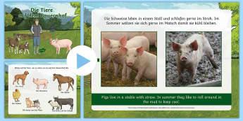 Where Farm Animals Live PowerPoint German - Farm Animals,German, MFL, Languages, Bauernhof