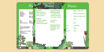 Year 3 Plants Scientific Vocabulary Poster - vocabulary, poster