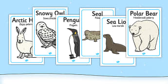 Polar Regions Animals Display Posters Polish Translation - polish, arctic, animals, display posters, display, posters