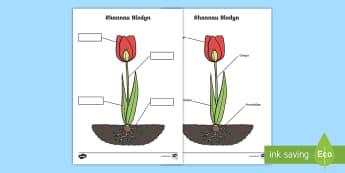 Taflen Weithgaredd Labeli Rhannau Blodyn - plant, flower, label, blodyn, labeli, rhannau, petal, deilen, coesyn, gwyddoniaeth,Welsh
