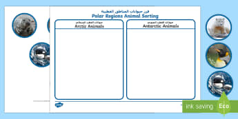 Polar Regions Animal Sorting Activity English/Arabic - The Arctic, Polar Regions, north pole, south pole, explorers, orca, whale, penguin, polar bear, anta