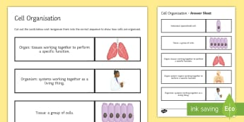 Cell Organisation Sequencing Cards - Sequencing Cards, gcse, biology, cell, cells, organisation, tissue, tissues, organ, organs, system,