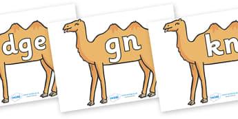 Silent Letters on Camels - Silent Letters, silent letter, letter blend, consonant, consonants, digraph, trigraph, A-Z letters, literacy, alphabet, letters, alternative sounds