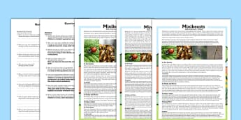 Minibeasts Differentiated Reading Comprehension Activity Polish Translation - polish, minibeasts, differentiated, reading comprehension, activity