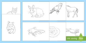 Extra Large Pets Themed Colouring Pages - KS2 National Pet Month (April 2017)