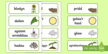 Cardiau Geirfa Planhigion  - plants, word, cards, planhigion, geirfa, cardiau,Welsh
