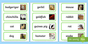 Pets Topic Word Cards - Word Card, flashcard, flashcards, Pets, Pet, rabbit, cat, dog, hamster, gerbil, rat, chincilla, mouse
