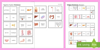 Digestion Picture Dominoes - Dominoes, Digestion, Digestive System, Mouth, Oesophagus, Enzymes, Stomach, Intestines, Villi, Capil