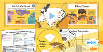 PlanIt - Science Year 5 - Living Things and Their Habitats Lesson 3: Mammals Lesson Pack - life cycle, monotremes, marsupials