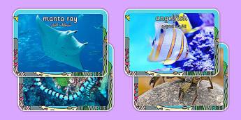 Sea Creature Display Photos Arabic Translation - bilingual, fish, posters, sea, creature, Arabic, animals, ocean, seaside, under the sea