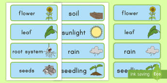 Plant Word Cards - Early Childhood Plants, Pre-K Plants, Plants, Pre-Kindergarten Plants, K4 Plants, 4K Plants, plant v