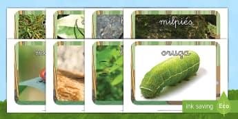 Fotos de exposición: Bichos - libélula, abeja, caracol, hormiga, típula, escarabajo, mariposa, oruga, gusano, mariquita, cochini