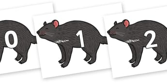 Numbers 0-31 on Tasmanian Devil - 0-31, foundation stage numeracy, Number recognition, Number flashcards, counting, number frieze, Display numbers, number posters