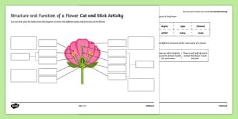 Structure and Function of a Flower Cut and Stick Activity Sheet, worksheet