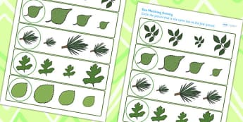 Leaf Size Matching Worksheet - leaf, flower, plant, matching