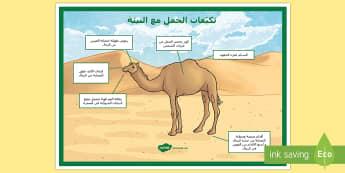 ملصق تكيف الجمال مع الصحراء - الجمل، البئية، التكيف، التكيفات، علوم، ملصق، الحيوانا