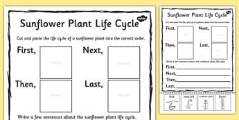 Sunflower Plant Life Cycle Sentence Writing Activity Sheet - life, worksheet