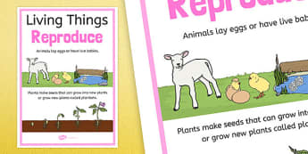Living Things Reproduce Display Poster - australia, Science, Year 3, Living, Non-Living, Characteristics, Poster, Australian Curriculum