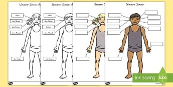 Körperteile: Unsere Sinne Arbeitsblatt - Körperteile: Sinne Arbeitsblatt, Körperteile Arbeitsblatt, Körperteile, Der Körper, Der Mensch,