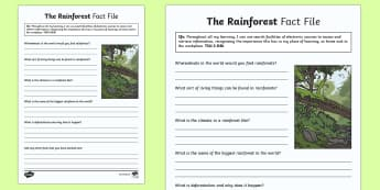 The Rainforest Fact File - CfE Writing, facts, internet, search engine, information, rain forest, TCH 2-03b, technologies,Scott