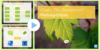 Photosynthesis What's the Connection? PowerPoint - KS4 What's the Connection?, Photosynthesis, Glucose, Water, Carbon Dioxide, Oxygen, Limiting Factor