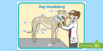 Dog Vocabulary A4 Display Poster - EYFS Pets, Animals, National Pet Month, dogs, word mat, spell, spelling, dog, body, parts,