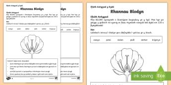 Taflen Weithgaredd Rhannau Blodyn - plant, parts,flower, label, rhannau, blodyn, labeli, paill, anther,Welsh